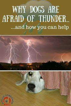 why are dogs scared of thunder 56 best images about for the discerning doggies in the family on