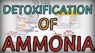 Ammonia Detox Problems by High Ammonia Levels Liver Disease Alot