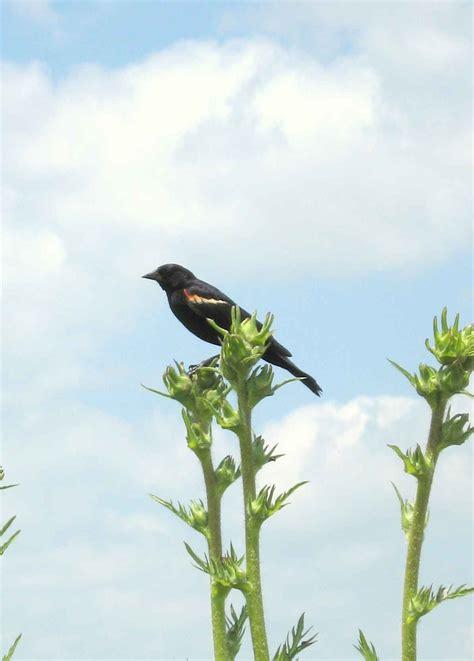 prairie fever 187 blog archive 187 bird watching in chicago