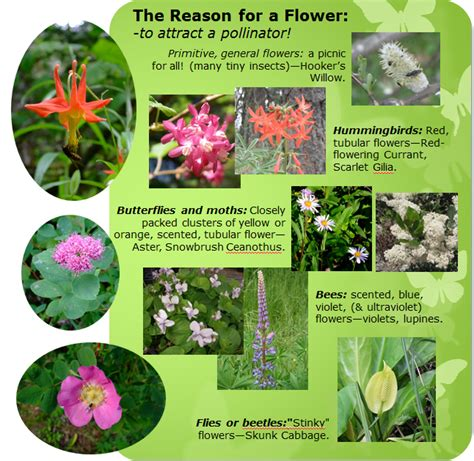 8 Reasons To Send Flowers by Attract Wildlife With Flowers Habitat Horticulture Pnw
