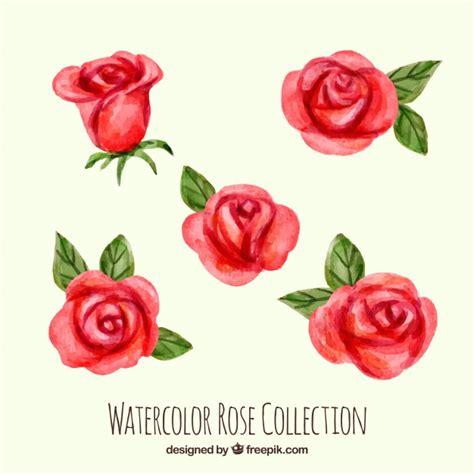 imagenes de rosas rojas descargar gratis pack de rosas rojas de acuarela descargar vectores gratis