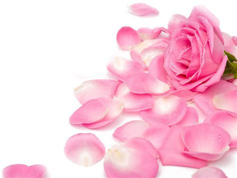 Mother Of Pearl Home Decor by Roses Images Pretty Pink Roses Hd Wallpaper And Background