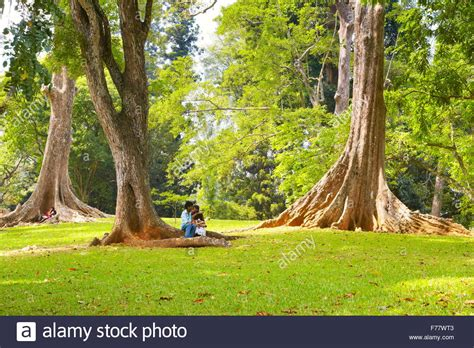 Kandy Botanical Gardens Sri Lanka Kandy Peradeniya Botanic Garden Stock Photo Royalty Free Image 90528371 Alamy