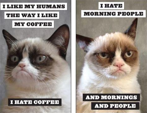 Morning People Meme - grumpycat google search grumpy cat pinterest cats