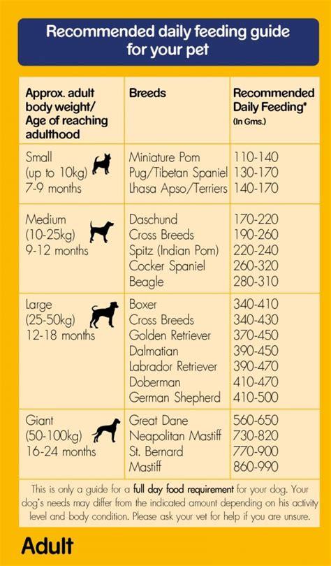 pedigree food for labrador puppies labrador food chart india pedigree food 100 vegetarian 3 kg dogspot