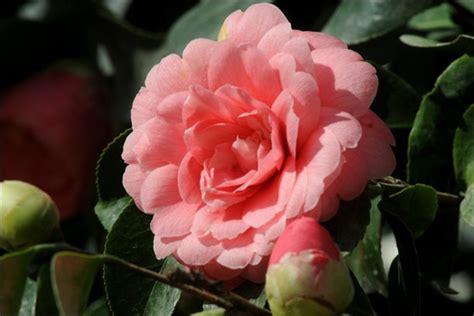 nomi di fiori rari ecco i 5 fiori tra i pi 249 rari mondo