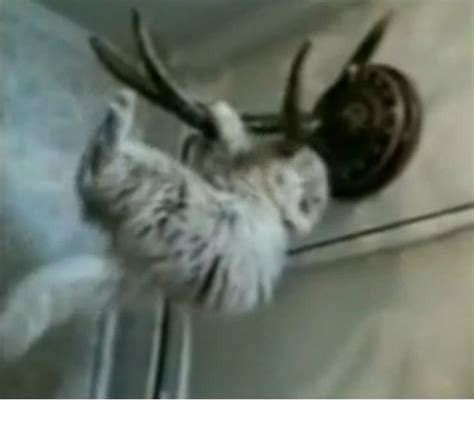 gatitos traviesos gatos juguetones traviesos