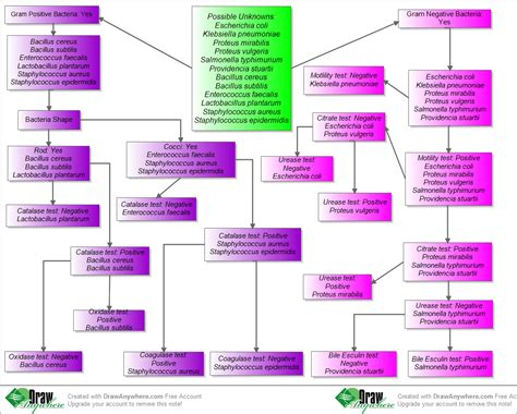 microbiology flowchart unknown bacteria bacteria identification flow chart unknown