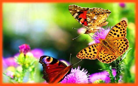 wallpaper bunga dan kupu kupu gambar kupu kupu dan bunga gambar pemandangan