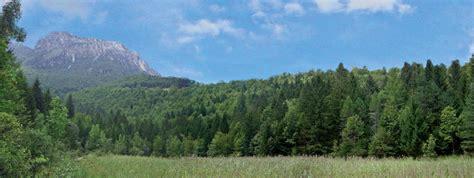 di sondrio brescia crescono i boschi lombardi bergamo brescia e sondrio in