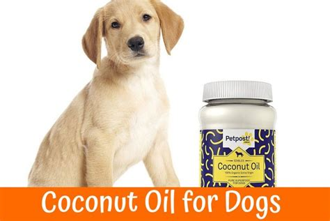 can dogs eat coconut is the coconut for dogs a healthy product for the coat and the skin of the