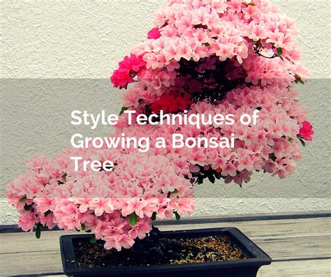 bonsai secrets designing growing 0762106247 style techniques of growing a bonsai tree