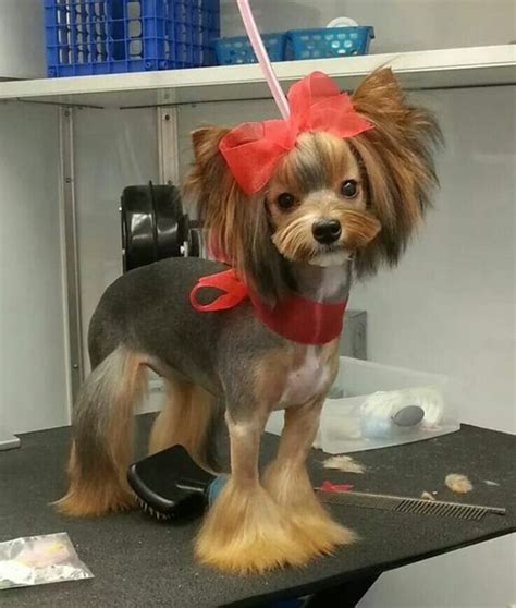 dog hair styles new haircut 30 different dog grooming styles tail and fur