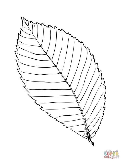 hickory leaf coloring page ausmalbild blatt einer felsen ulme ausmalbilder