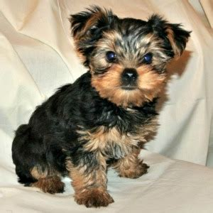 small dogs small breeds name