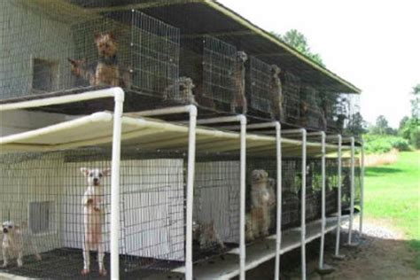 define puppy mill carolina lawmakers vote to regulate puppy mills modern magazine