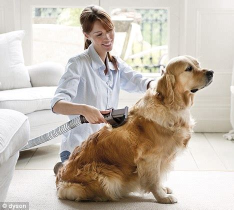 clean dog hair off couch pet hairs on the sofa vacuum the dog daily mail online