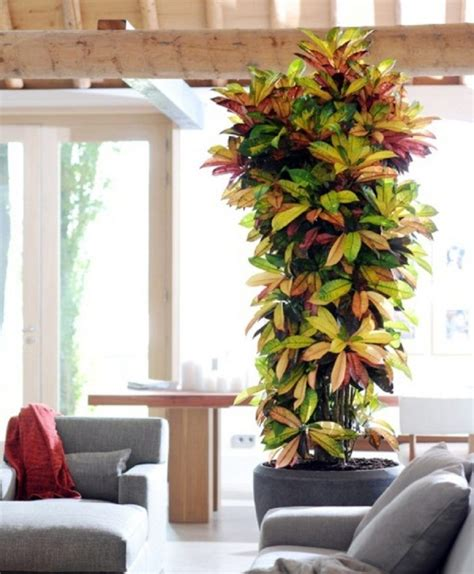 indoor house tree 13 popular tall or large indoor houseplants you must know