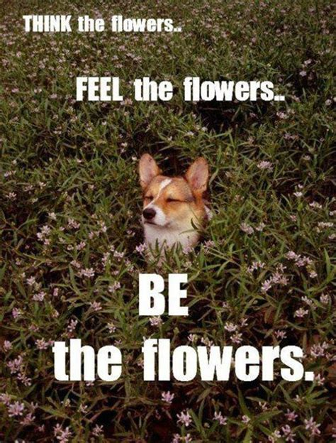 Funny Spring Memes - funny quotes about flowers quotesgram