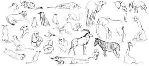 Carnivorous Animals Drawings Animal Life By sketch template