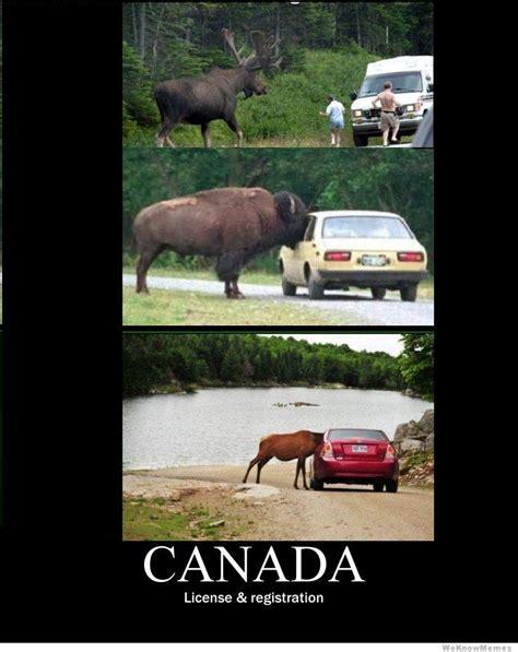 Canada Meme - canada meme