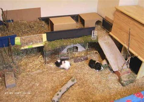 meerschweinchen wohnung meerschweinchen info gehege eigenbau
