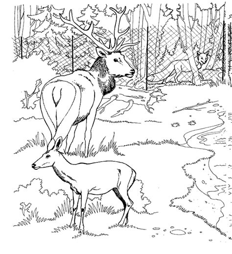 Deer Coloring Pages Coloringpages1001 Com Free Deer Coloring Pages