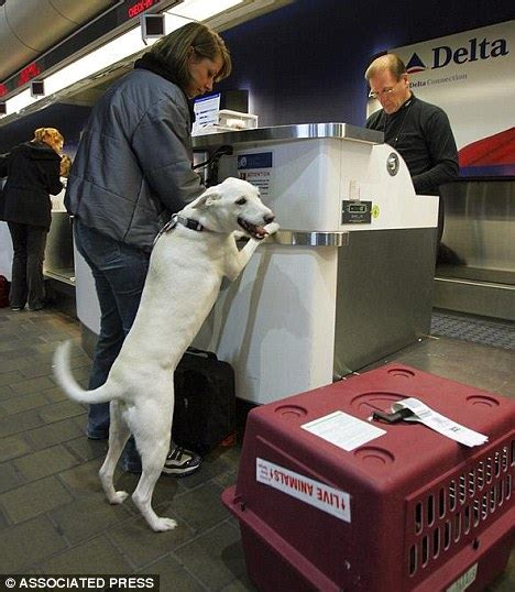 more than half of pets who died during airline travel last year flew delta daily mail