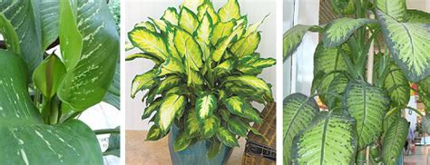 Houseplants That Don T Need Sunlight Houseplants What Are Some Low Maintenance Plant Choices