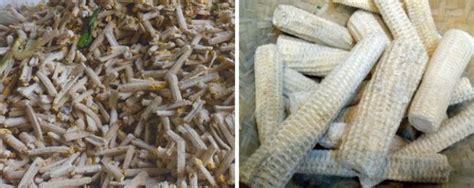 membuat silase tongkol jagung  pakan ternak