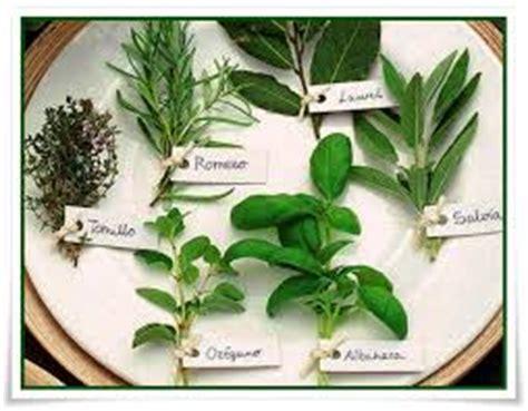 las plantas mgicas plantas esot 233 ricas la puerta esot 233 rica