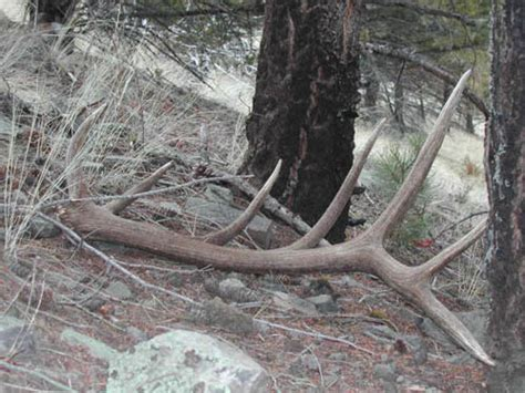 Elk Sheds by Alf Img Showing Gt Big Elk Sheds