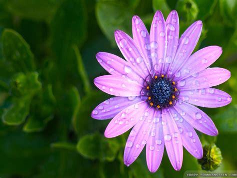 flowers in light light purple flowers