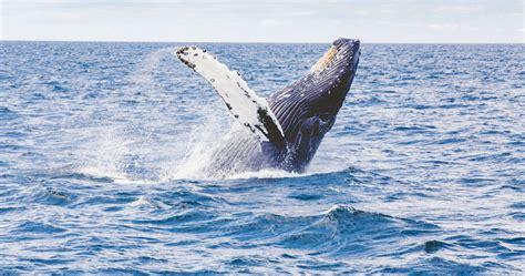 whale watching  byron bay rtw backpackers