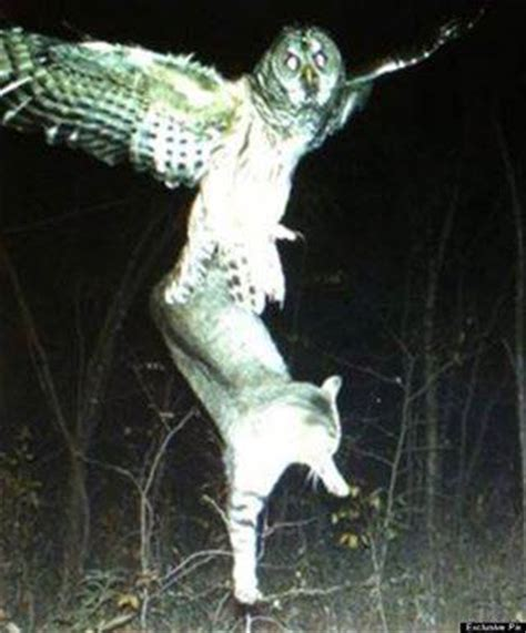 cats safely roam  outdoors   panhandle area
