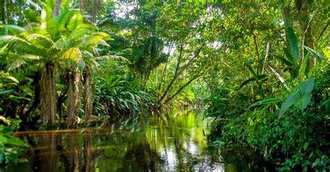 la selva de sara la selva amaz 243 nica fue plantada por los ind 237 genas