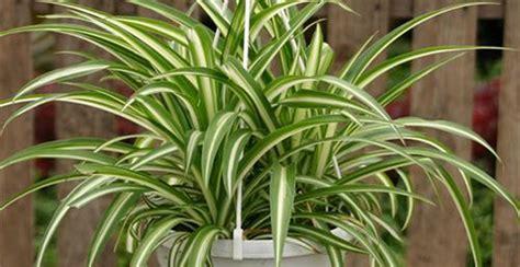 piante ufficio le piante incrementano la produttivit 224 nei luoghi di
