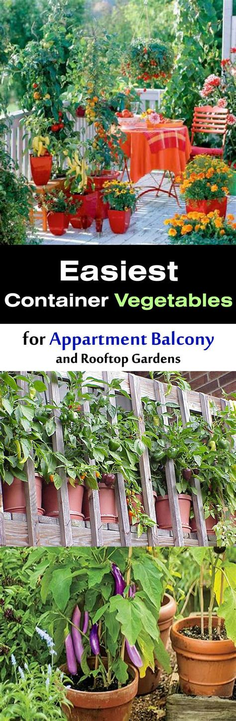 see how you can grow amazing vegetables in raised garden easiest vegetables for balcony rooftop garden