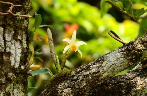 common plants in a tropical rainforest spotlight the discover