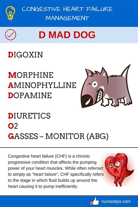 congestive heart failure chf nursing care plan management congestive heart failure management d mad dog nurses tips