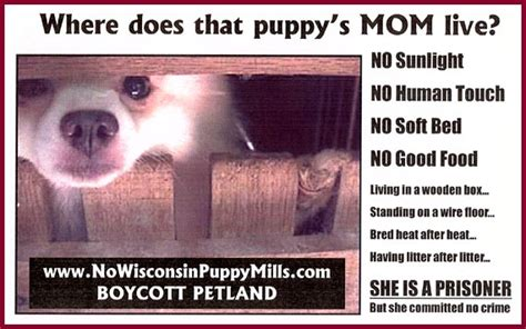 what does petland do with puppies that don t sell wisconsin puppy mill project inc position paper petland and other pet shops