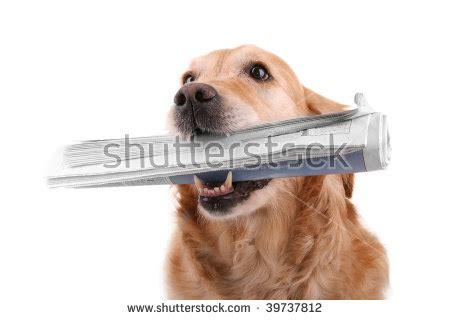 golden retriever digestive problems newspaper stock images royalty free images vectors