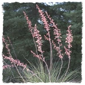 Houston Plants Garden World by Yucca Houston Plant And Garden World