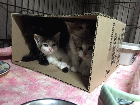 stray cat trap stray cat spots a trap then lures kittens into it so they