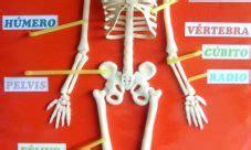 como hacer una maqueta del esqueleto humano esqueleto humano