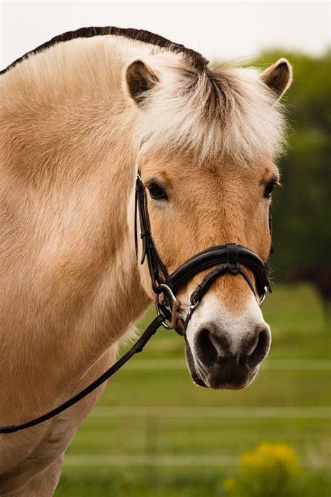 fjord quizlet mijn favoriete paardenrassen quizlet nl