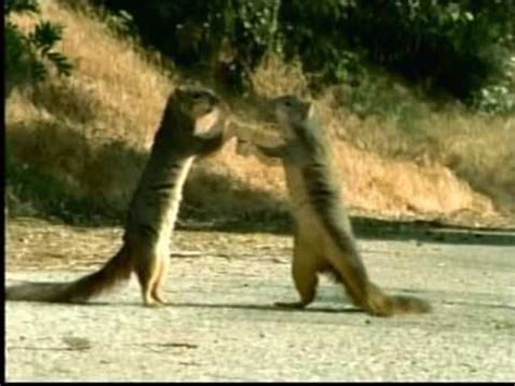 squirrel commercial geico fgklbruga geico squirrels dogs and lizard youtube