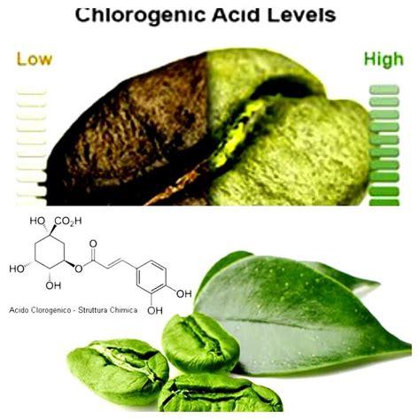 alimenti con acido clorogenico acido clorogenico le propriet 224 di un ottimo antiossidante