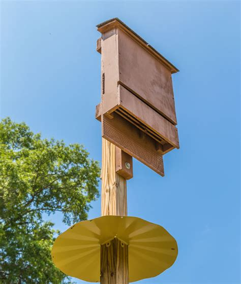 bat house placement use bat houses for mosquito control nature and environment mother earth news