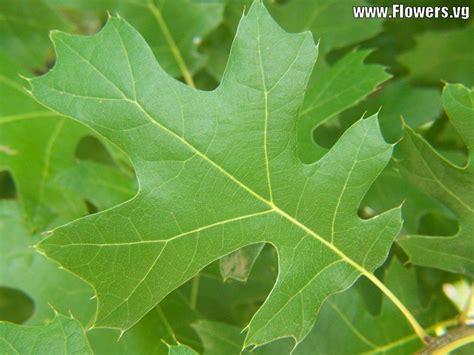 Orange Leaf Gift Card Value - botany 130 gt baum gt flashcards gt quiz one tree identification studyblue